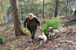 A Tuscan truffle hunter and his trusty hounds on the scent.